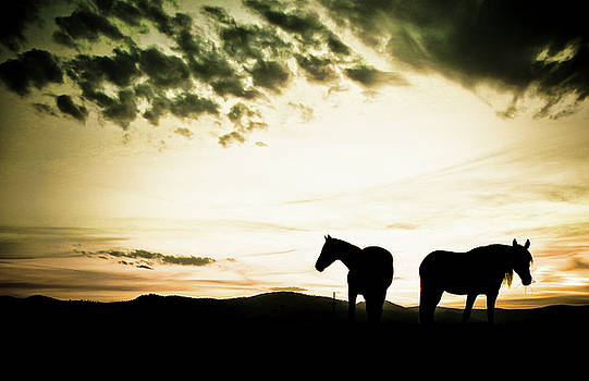 Horses at sunset by Alan Anderson