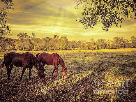 Horses at Sunset by Peggy Franz