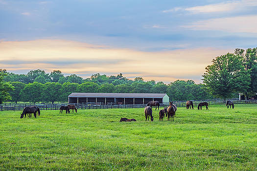 Horses at Twilight by Andrew Kazmierski