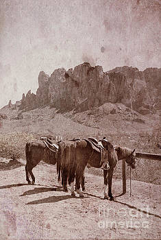 Jill Battaglia - Horses by Superstition Mountains