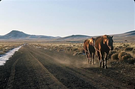 Horses Cruising by Lynard Stroud