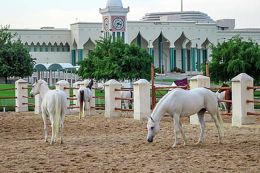 Horses by Ehab Amin