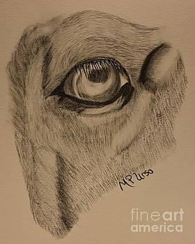 Maria Urso - Horse