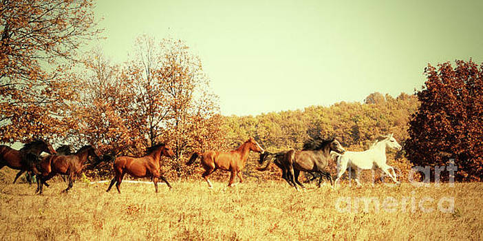 Dimitar Hristov - Horses Galloping in The Autumn Field