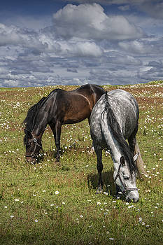 Randall Nyhof - Horses grazing in a Pasture with Daisies under a Cloudy Sky