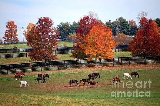 Horses Grazing in the Fall by Sumoflam Photography