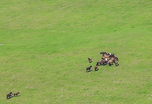 Horses grazing on green pasture by Lukasz Szczepanski