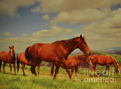 Horses Grazing by Ruth Housley