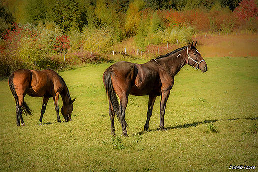 Horses in Mabou by Ken Morris