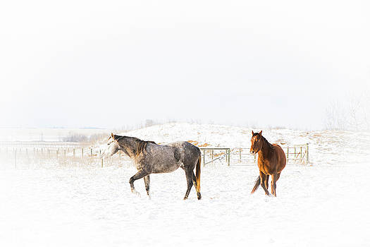 Horses in Snow by Windy Corduroy