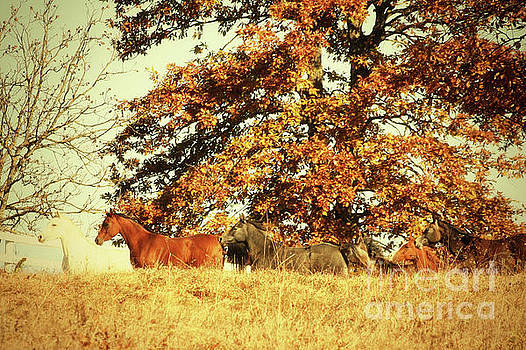 Dimitar Hristov - Horses in The Autumn Forest
