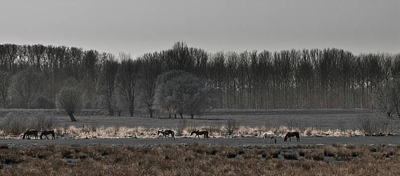 Horses by Jos Verhoeven