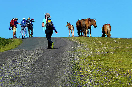 Horses on the Camino by Mike Shaw