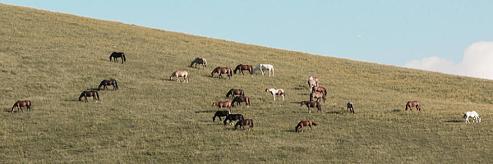 Horses On The Hill by D K Wall