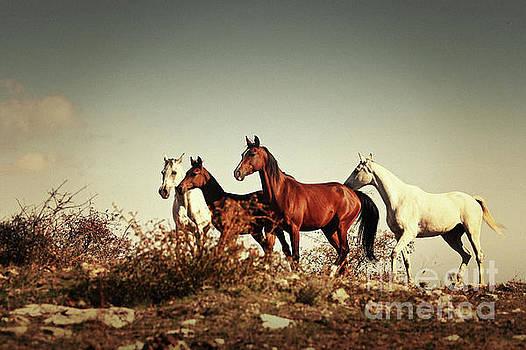 Dimitar Hristov - Horses running stallions - Black and White