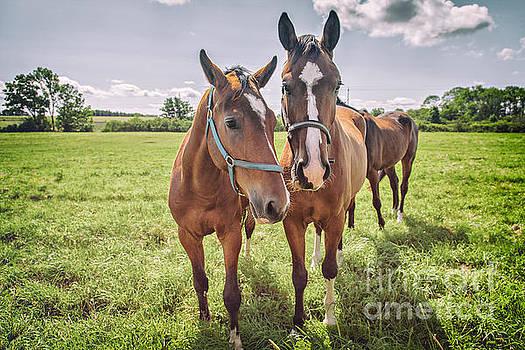 Sophie McAulay - Horses