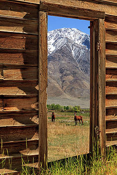 Horses Through The Door by James Eddy