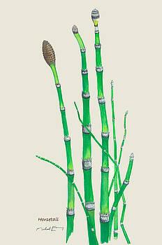 Horsetail - Equisetum arvense by Michael Earney
