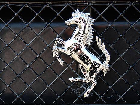 Horsey by John Schneider