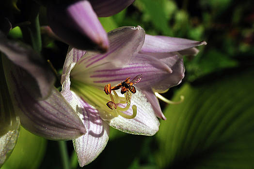 Hosta and Guest by Lori Tambakis