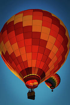 Hot Air Balloon-Orange by Mary D'Urso