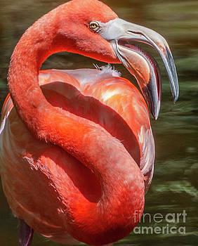 The Fabulous Flamingo by Edie Ann Mendenhall