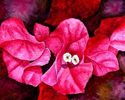 Hot Pink Bougainvillea by Darla Brock