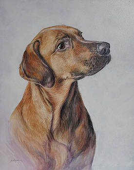 Hound Dog Portrait by Gail Dolphin
