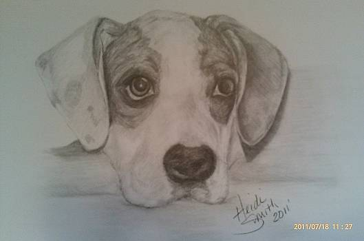 Hound puppy by Heidi Smith