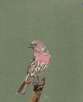 House Finch by Barb Kirpluk