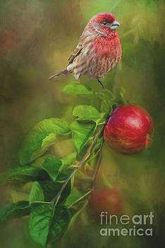House Finch on Apple Branch 2 by Janette Boyd