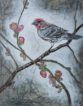 House Finch by Sheri Howe