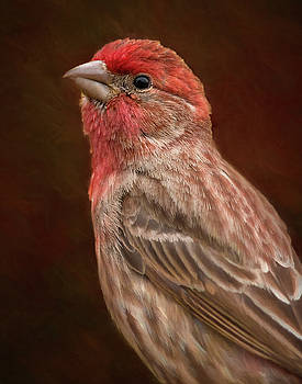 House Finch Standing Proud by Jerry Deutsch