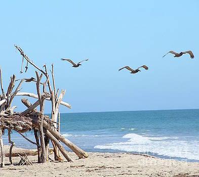 House of Sticks Trestles Beach California by Linda Queally