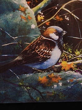 House Sparrow by Catherine Robertson