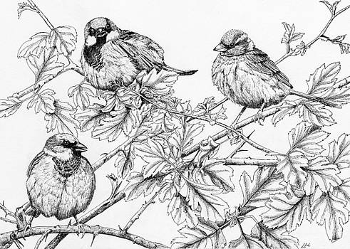 House Sparrows on Hawthorn by Lynne Henderson