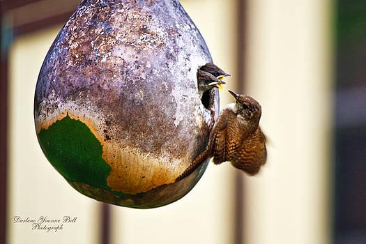 Darlene Bell - House Wren Feeding Nestlings