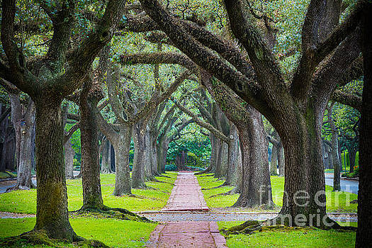 Houston Trees by Inge Johnsson