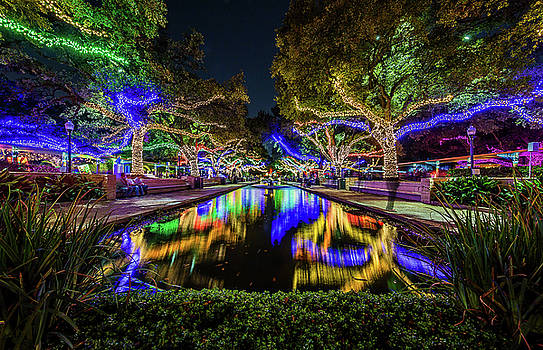 Houston Zoo Christmas Lights by Micah Goff