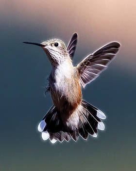 Hovering Hummer by Wes and Dotty Weber