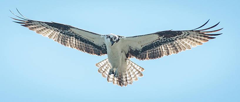 Hovering  by Joy McAdams