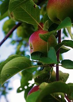 Lori Kingston - How Do You Like Them Apples?