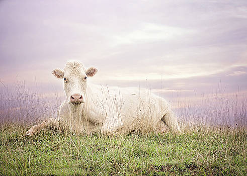 Heather Applegate - How Now White Cow