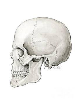 Human Skull by Insil Choi
