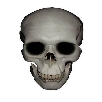 Tracey Harrington-Simpson - Human Skull Vector Isolated