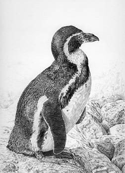 Humboldt Penguin by Craig Carlson