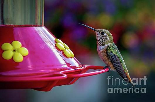 Jon Burch Photography - Hummer