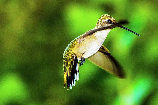 Humminbird 01 - 9-13 by Barry Jones