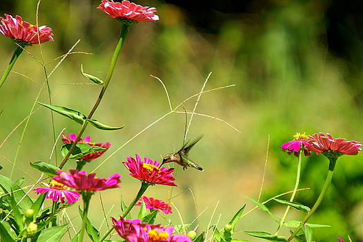 Humming Bird and Flowers by Danny Jones