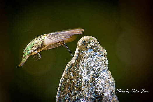 John Tarr Photography  Visual Adventurer - Humming Bird Hovering Over Water Fountain Getting a Drink